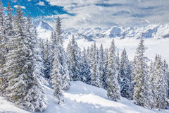 Trees covered by fresh snow in Tyrolian Alps, Kitzbuhel, Austria Stock Photography