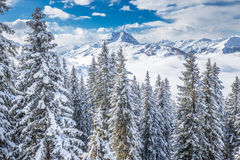 Trees covered by fresh snow in Tyrolian Alps from Kitzbuhel ski resort, Austria Stock Photo