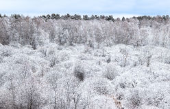 Trees covered by frost. Stock Photography