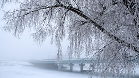 The trees covered with frost. The bridge in the fog in the background. Stock Images