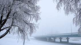 The trees covered with frost. The bridge in the fog in the background. Royalty Free Stock Photography