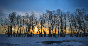 Trees covered with frost and crows over them Stock Image