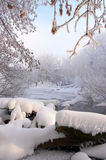 Trees covered with frost Stock Photos