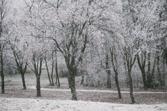 Trees covered with frost Royalty Free Stock Images