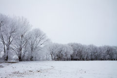 Trees covered in frost Royalty Free Stock Photos