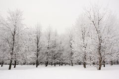 Trees covered with frost in winter park Stock Photography