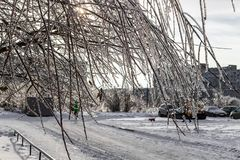 Trees covered with frost in winter stock photography