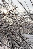Trees covered with frost in winter stock image