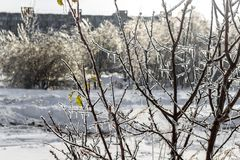 Trees covered with frost in winter royalty free stock photo
