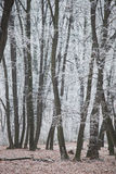 Trees covered with frost Royalty Free Stock Photo
