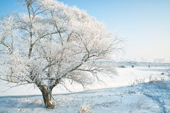 Trees covered with glaze. A tree covered with ice feathers,Wusong Island,Jilin China Royalty Free Stock Photography