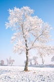 Trees covered with glaze. A tree covered with ice feathers,Wusong Island,Jilin China Stock Photos