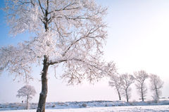 Trees covered with glaze. A tree covered with ice feathers,Wusong Island,Jilin China Royalty Free Stock Image