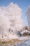 Trees covered with glaze. A tree covered with ice feathers,Wusong Island,Jilin China Stock Photo