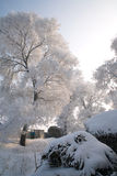 Trees covered with glaze. A tree covered with ice feathers,Wusong Island,Jilin China Royalty Free Stock Photo