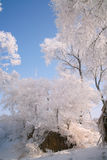 Trees covered with glaze. A tree covered with ice feathers,Wusong Island,Jilin China Royalty Free Stock Photos