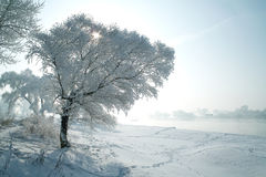 Trees covered with glaze. A tree covered with ice feathers,Wusong Island,Jilin China Stock Image