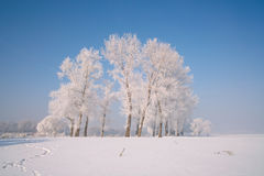 Trees covered with glaze. A tree covered with ice feathers,Wusong Island,Jilin China Stock Photography