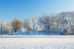 Trees covered by hoarfrost Royalty Free Stock Image