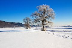 Trees covered with hoarfrost Royalty Free Stock Images