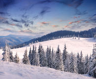 Trees covered with hoarfrost Stock Image