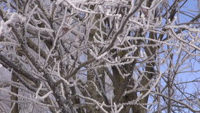 Trees covered with hoarfrost. Against blue sky on sunny day - nature background stock video footage