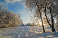 Trees covered with hoarfrost against the  sky Stock Photography
