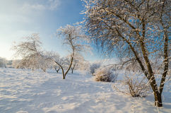 Trees covered with hoarfrost against the  sky Royalty Free Stock Photo