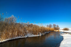 Trees covered with hoarfrost on the banks of  frozen river. Royalty Free Stock Photo