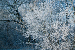 Trees covered with hoarfrost. Stock Photos