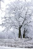 The trees are covered with hoarfrost in the field. The trees are covered with hoarfrost in a foggy field Stock Photography