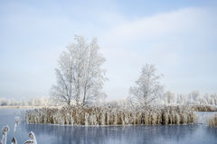 Trees are covered with hoarfrost on the island in the middle of the lake, covered with ice Royalty Free Stock Image