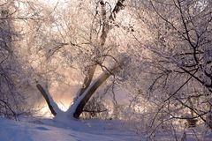 Trees covered with hoarfrost Royalty Free Stock Photo
