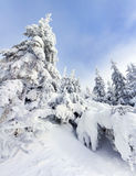 Trees covered with hoarfrost and snow Stock Photos