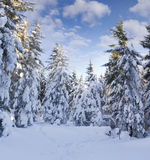 Trees covered with hoarfrost and snow Stock Photo