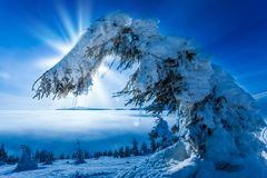 Trees covered with hoarfrost and snow in mountains Royalty Free Stock Photos