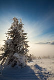 Trees covered with hoarfrost and snow in mountains Royalty Free Stock Photography