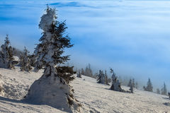 Trees covered with hoarfrost and snow in mountains Royalty Free Stock Images