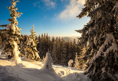 Trees covered with hoarfrost and snow in mountains Stock Images