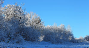 Trees covered with hoarfrost and snow in mountains Stock Image