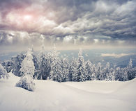 Trees covered with hoarfrost and snow in the mountains Stock Images