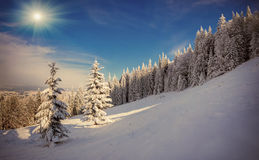 Trees covered with hoarfrost and snow in mountains Stock Photography