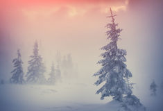 Trees covered with hoarfrost and snow in mountains. Stock Images