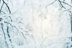 Trees covered with hoarfrost and snow Stock Photography