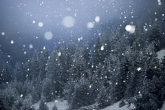 Trees covered with hoarfrost and snow in winter mountains - Chri Stock Photography