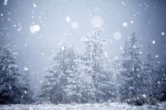 Trees covered with hoarfrost and snow in winter mountains - Chri Royalty Free Stock Images