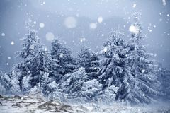 Trees covered with hoarfrost and snow in winter mountains  Royalty Free Stock Photo