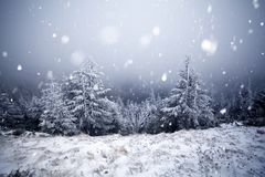 Trees covered with hoarfrost and snow in winter mountains  Stock Photography