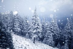 Trees covered with hoarfrost and snow in winter mountains Royalty Free Stock Photos