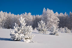 Trees covered with hoarfrost Stock Photo